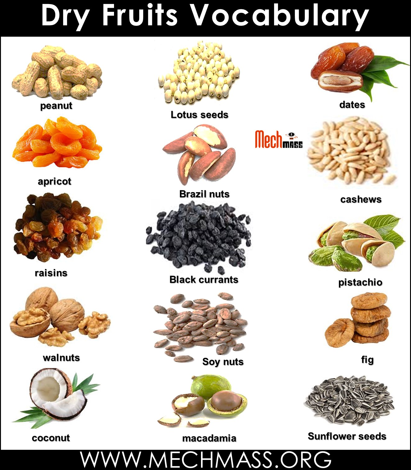 dry fruits vocabulary words with pictures