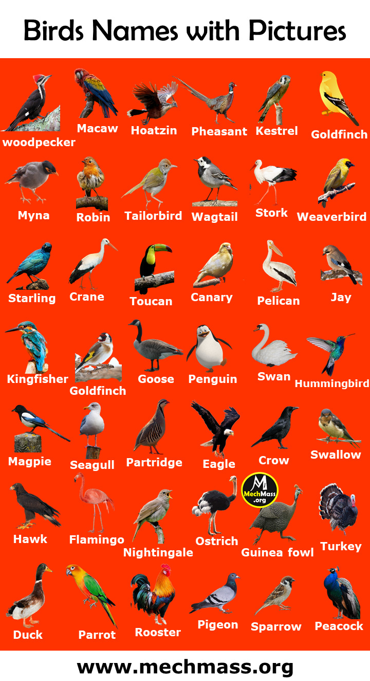 birds vocabulary with pictures