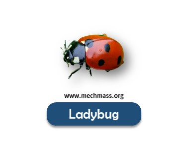 Flying insects names list (10)