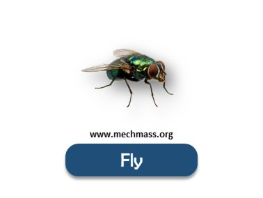 Flying insects names list (4)