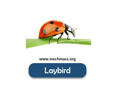 Flying insects names list (6)