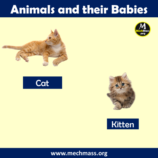 baby name of cat