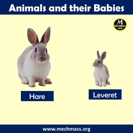 baby name of hare