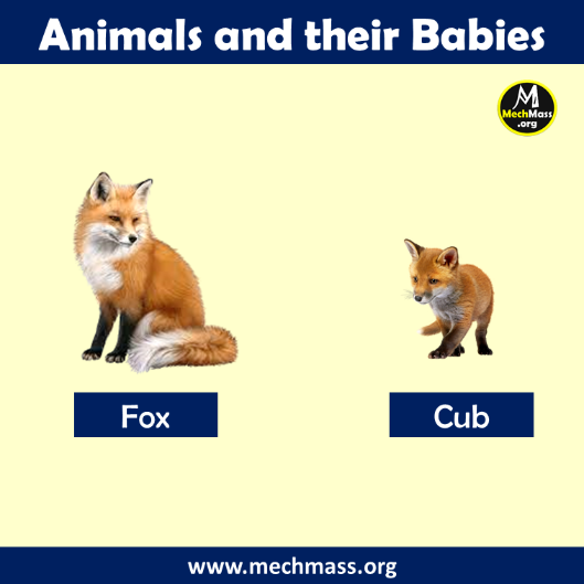 baby name of fox