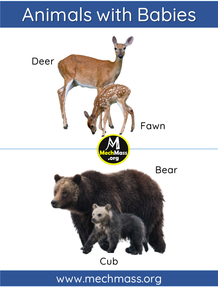 animals and babies