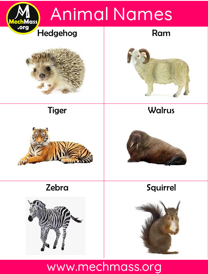 animal names with pictures