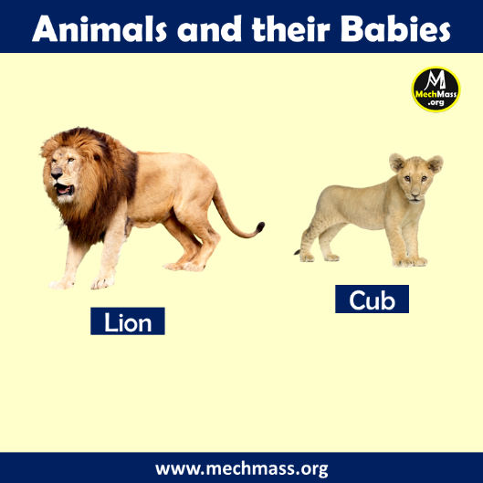 baby name of lion