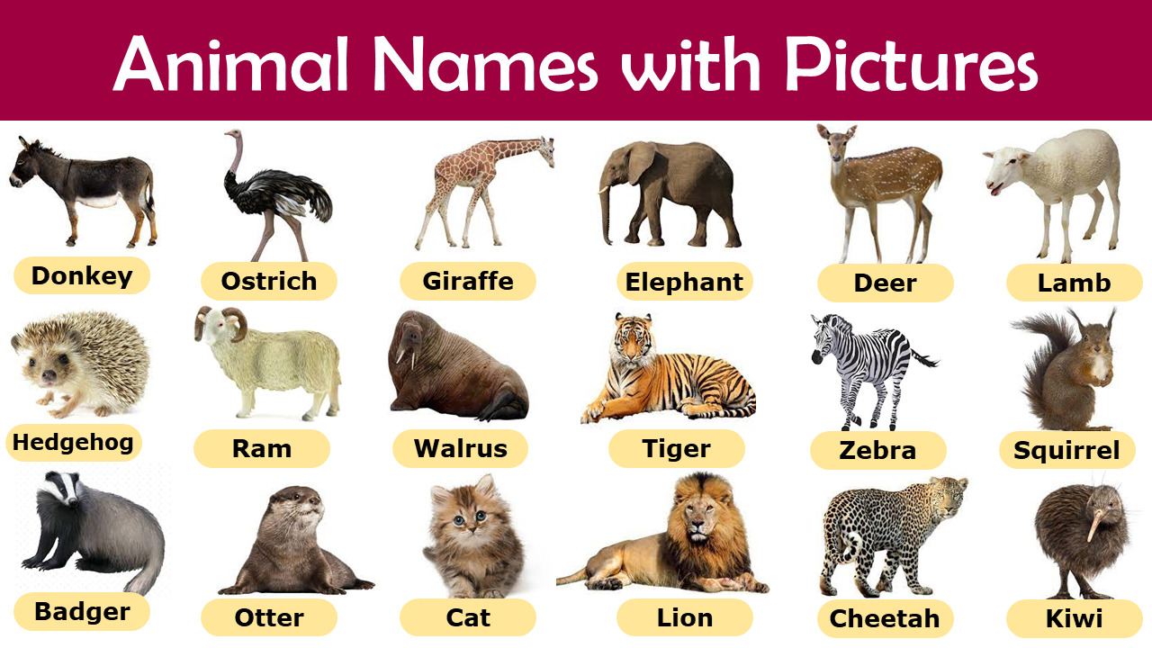 A to Z Animal Name with Picture