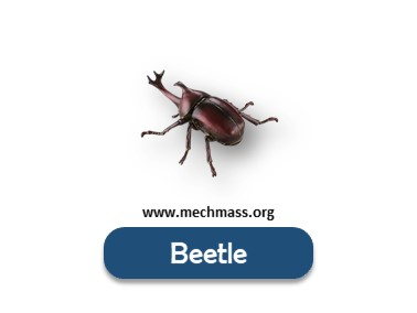 list of insects names with pictures (3)