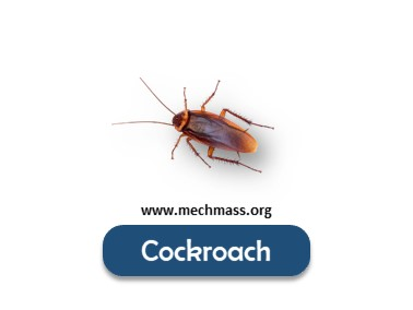 list of insects names with pictures (5)